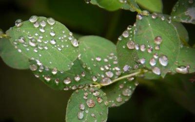 10 lucruri pe care nu le știai despre legătura dintre umiditate și sănătate!
